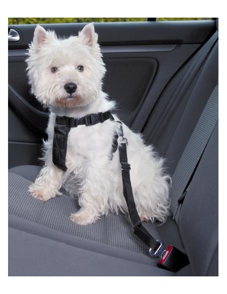 Peitoral para cães para Automóvel