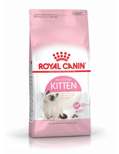 Royal Feline Kitten