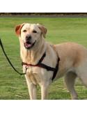 Peitoral para cães Walk Soft