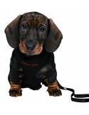 Peitoral para cães + trela
