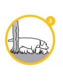 Bandeja sanitaria Puppy Training Set Trixie Resguardos para Cães