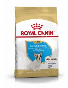 Royal Canin Bulldog Frances Junior Alimento Seco Cão