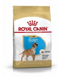 Royal Canin Boxer Puppy Alimento Seco cão