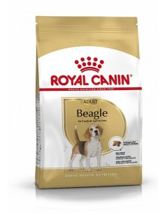 Royal Canin Beagle Adult, Alimento Seco Cão