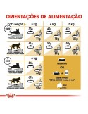 Royal Canin Persa Adulto Gato, Alimento Seco Royal Canin Gatos