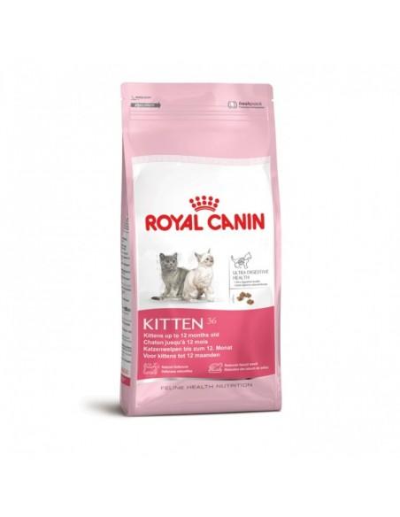 Royal Canin Kitten Gato, Alimento Seco | Gatos | Royal Canin