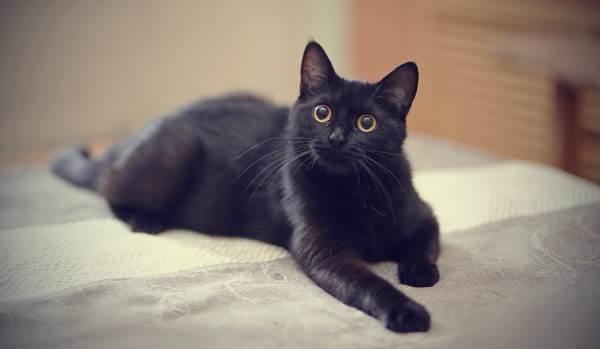 A Verdadeira História Do Gato Preto