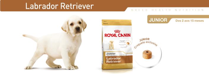 ra o para c es royal canin labrador junior alimento seco c o. Black Bedroom Furniture Sets. Home Design Ideas